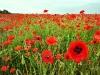 Shropshire Fields